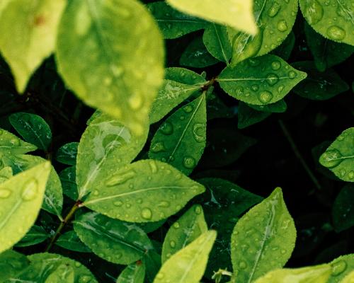 wet leaves header image